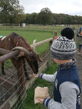 Our Halloween Visit To Bluebell Farm